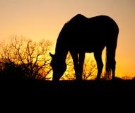 Pascolo della siluetta del cavallo Immagini Stock Libere da Diritti