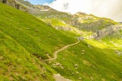 Pascolo della traccia di camminata vicina delle pecore sopra il lago Oeschinensee immagine stock