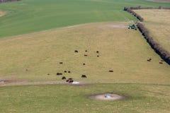 Pascolo delle mucche fotografie stock
