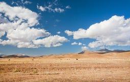 Pascolo delle mucche nella distanza su un campo asciutto sotto un cielo blu nuvoloso Fotografia Stock