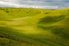 Pascolo delle mucche in valey verde Fotografia Stock