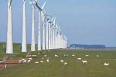 Pascolo delle pecore al lato di una riga dei mulini a vento Immagine Stock