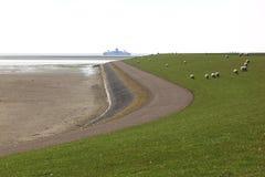 Pascolo delle pecore alla diga dell'isola di Ameland, i Paesi Bassi Immagine Stock Libera da Diritti