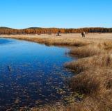 Pascolo di Bashang in Inter-Mongolia della Cina Fotografie Stock