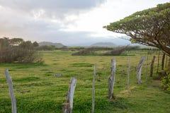 Pascolo di Maui Fotografia Stock