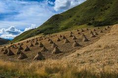 Pascolo di Ruoergai, Xiahe, Gannan, Cina fotografia stock libera da diritti