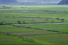 Pascolo di Zhongdian Fotografia Stock