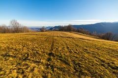 Pascolo dorato nelle alpi Fotografia Stock Libera da Diritti