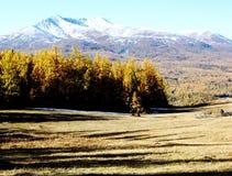 Pascolo, foresta, montagna della neve Immagini Stock