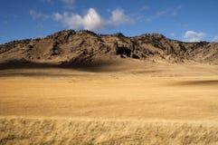 Pascolo giallo del grano che coltiva roccioso nordico della valle scenica Fotografia Stock