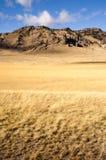 Pascolo giallo del grano che coltiva valle scenica Rocky Moun nordico Immagine Stock