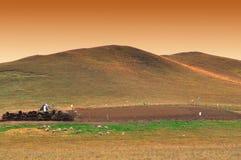 Pascolo nel Inner Mongolia Immagine Stock