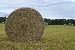 Pascolo rurale di agricoltura del paesaggio del prato del campo dell'azienda agricola del paese delle balle di fieno del cerchio Fotografie Stock