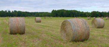 Pascolo rurale di panorama di agricoltura del paesaggio del prato del campo del paese delle balle di fieno dell'azienda agricola Fotografia Stock Libera da Diritti