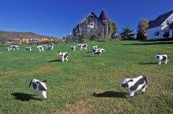 Pascolo statuario del bestiame sul prato inglese, Woodstock, VT immagine stock