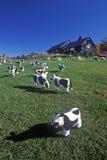 Pascolo statuario del bestiame sul prato inglese, Woodstock, VT immagini stock