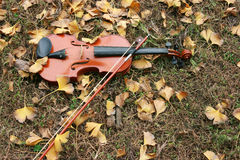 Pascolo sul violino Immagini Stock