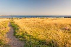 Pascolo sulla spiaggia di Williamstown Fotografia Stock