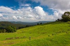 Pascolo verde con la foresta pluviale tropicale sui precedenti Fotografia Stock Libera da Diritti