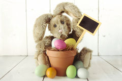 Pascua Bunny Themed Holiday Occasion Image Foto de archivo