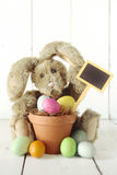 Pascua Bunny Themed Holiday Occasion Image Fotos de archivo