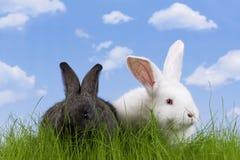 Pascua-conejo Fotos de archivo