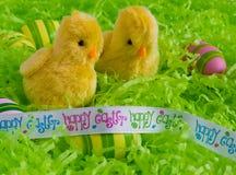 Pascua - dos polluelos felices del amarillo de Pascua con el fondo verde de los huevos rayados Imágenes de archivo libres de regalías