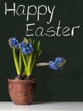 Pascua feliz con los jacintos Fotografía de archivo