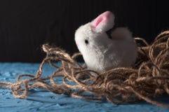 Pascua feliz conejito blanco del conejo del bebé en un color azul Imagenes de archivo