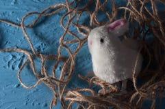 Pascua feliz conejito blanco del conejo del bebé en un color azul Imágenes de archivo libres de regalías