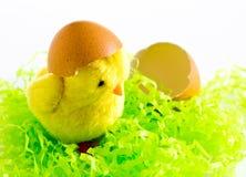 Pascua - polluelo feliz del amarillo de Pascua con la cáscara de huevo en el fondo blanco Foto de archivo