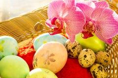 Pascua y huevos de codornices en una cesta, orquídea, mañana Imagenes de archivo