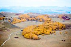 Pase por alto el abedul de plata del otoño en pasto Imagen de archivo