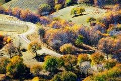Pase por alto el bosque del otoño en el prado Imágenes de archivo libres de regalías