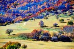 Pase por alto los abedules del otoño en el prado Fotos de archivo