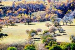 Pase por alto los abedules del otoño en la ladera Imagen de archivo