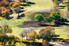 Pase por alto los abedules del otoño en la pradera Imagenes de archivo