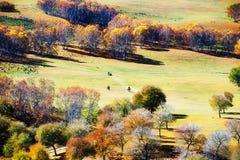 Pase por alto los abedules del otoño en los prados Imagen de archivo libre de regalías