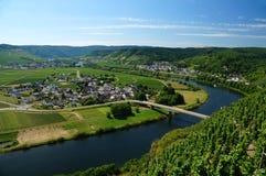 Pase por alto: Una curva del valle de Mosela de las cuestas de un viñedo fotografía de archivo libre de regalías