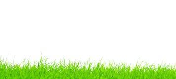 Pasemka zielona trawa Zdjęcia Stock