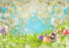 Pasen-achtergrond met eieren, pluizig konijn op gras, bloemen en de aard van de de lentebloesem Stock Fotografie
