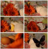 Pasen-collage met vogel, ei, vlinder Stock Foto's