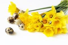 Pasen, de kaart van de de lentegroet, uitnodiging met kwartelseieren en gele gele narcissen, narcissen bloeit het liggen op witte Stock Foto