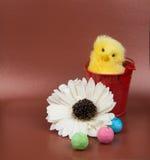Pasen-groetbeeld Kip met rode bascet, en bloem Stock Foto's