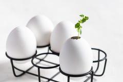 Pasen, het nieuwe leven, eco, stortingsconcept jonge spruit in een eierschaal in eikooi op witte achtergrond Sluit omhoog royalty-vrije stock foto