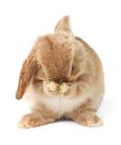 Pasen konijn stock afbeelding
