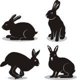 Pasen-konijn Stock Afbeelding