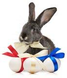 Pasen-konijn met eieren op witte achtergrond worden geïsoleerd die Stock Afbeelding