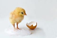 Pasen-kuiken en eishell stock fotografie