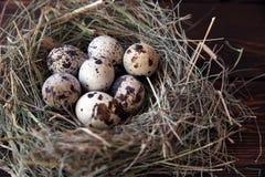 Pasen-kwartelseieren in het nest op rustieke houten Royalty-vrije Stock Fotografie